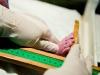 hamilefotograflarisebnem